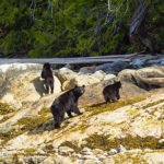 Nootka_Wilderness_Lodge_Bear