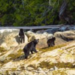 Nootka_Wilderness_Lodge_Bears